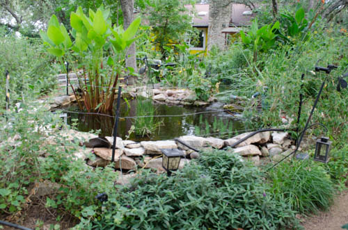 new small pond