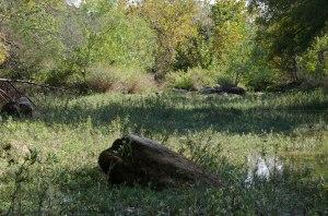 Barton Creek Mystery East end