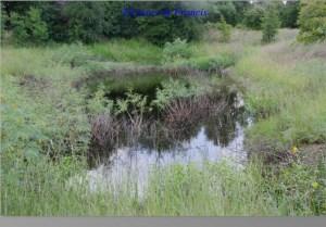 Pond at McKinney