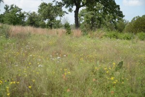 The flowers at McKinney Roughs