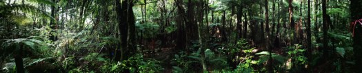 A panorama of the Puketoki Forest Reserve. I love this shot, I remember swiveling to take in the whole view.
