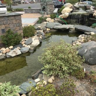 curbside pond