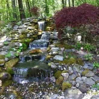 wooded glen