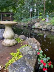 Pond & Garden Blog