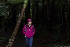 Into the forests of Cascades Kauri Park. © Violet Acevedo