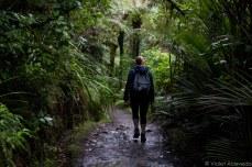 Treking through New Zeland nature at Cascades Kauri Park. © Violet Acevedo