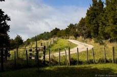 Farm roads next to Ruapekapeka Pa. © Violet Acevedo