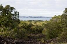 Distant views peek out from the treeline. © Violet Acevedo