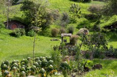 The gardeners are able to take home the veg they grow in the functioning garden set in the center of Hobbiton. © Violet Acevedo