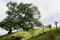 Weta's fake tree looks out from its perch on top of Bag End. © Violet Acevedo