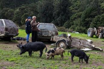 Candy and Stu speak while pigs roam. © Violet Acevedo