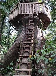 Want to Build Treehouse?