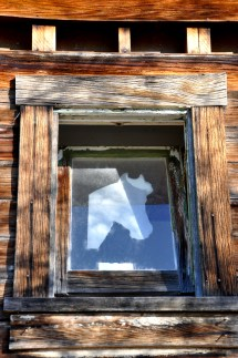 window, horse, arizona