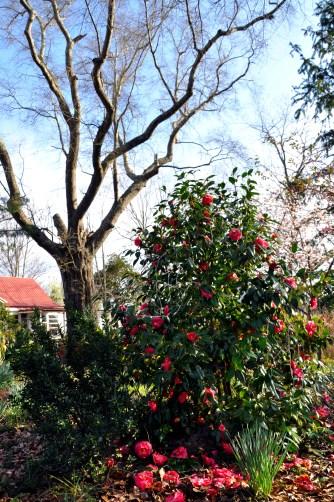 Alabama, blooms
