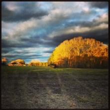stormclouds, trees, sunset, field, instagram