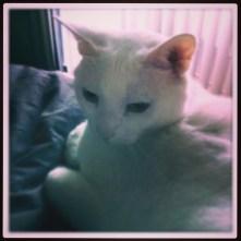 cat, Oxford, instagram