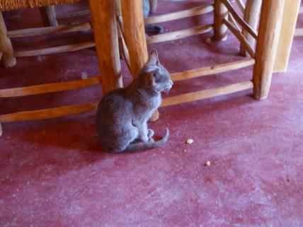Morocco cat near table