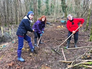 Conservation volunteering in the New Forest