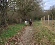 Balades à poney au Poiré sur vie