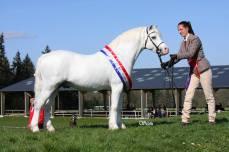 Colne Turbo - meilleur poney sur la saison de show 2015 en France
