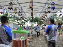 Proses Penilaian Kontes Burung Ponjong Enterprises