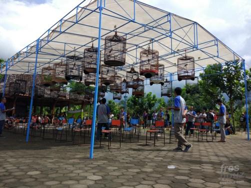 Suasana Kontes Burung Berkicau Ponjong Enterprises