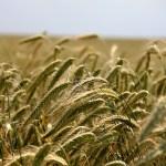 食料安全保障とグローバリズム、強い農業は正しいのか?