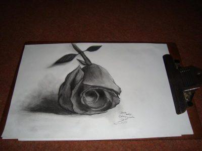 gambar 3d bunga di atas kertas
