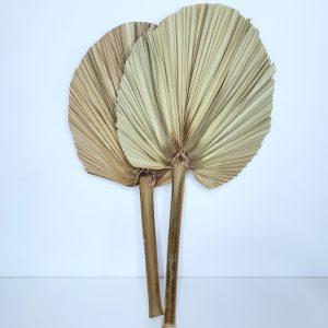 Folhas de Palmeira Leque Natural Seca