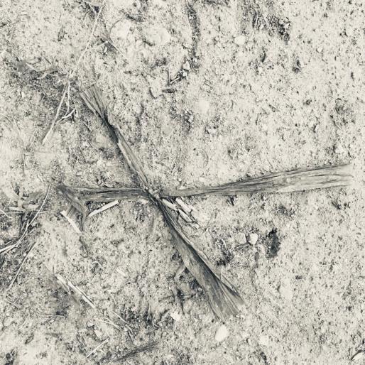 Sjaak Korsten, Witness - Nature