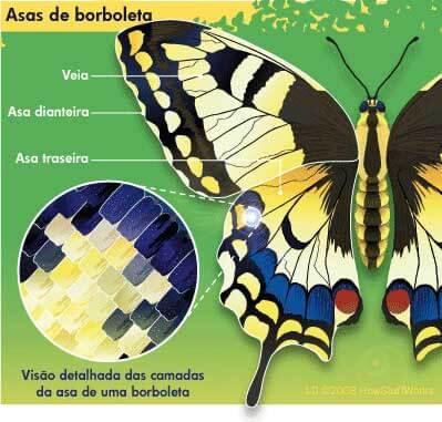 asas das borboletas