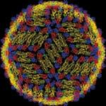 estrutura vírus