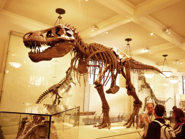 New York Sounds: American Museum of Natural History