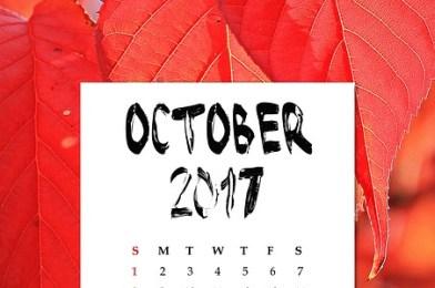 Libros recomendadísimos que hemos leído en octubre