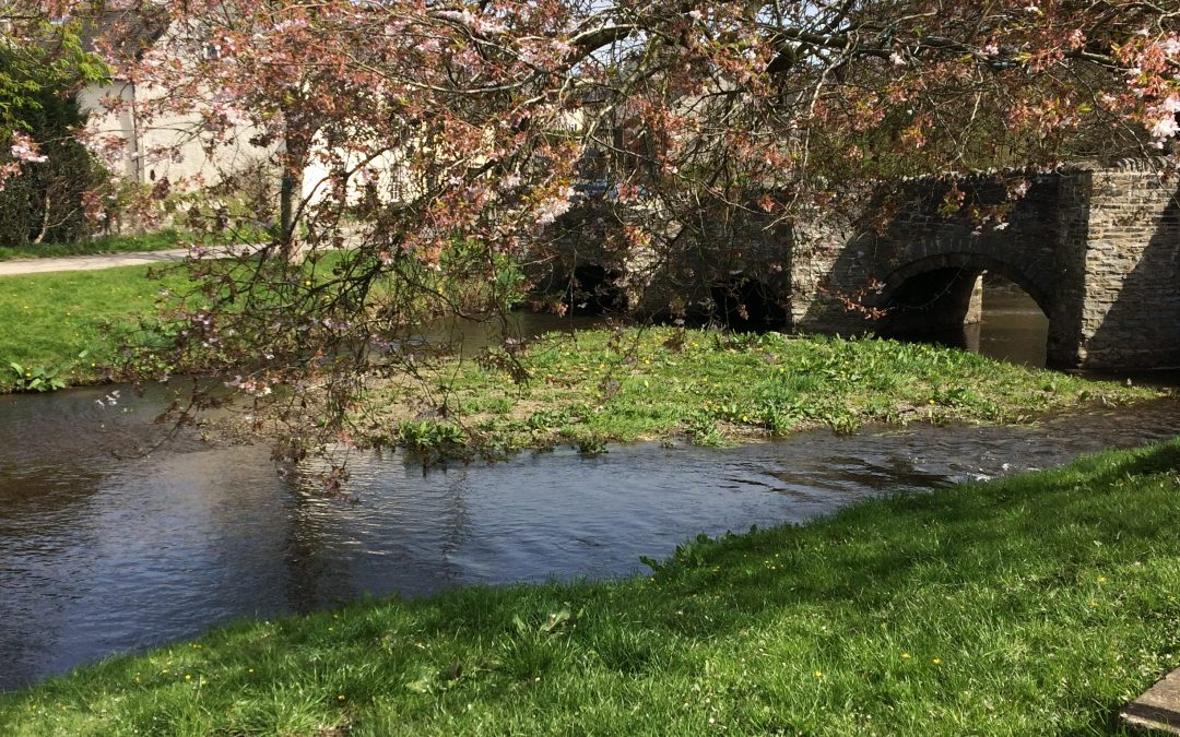 Spring blossom by the bridge in Clun