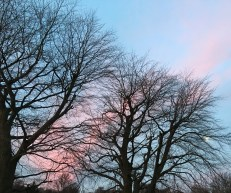 I love the trees' silhouettes this time of year