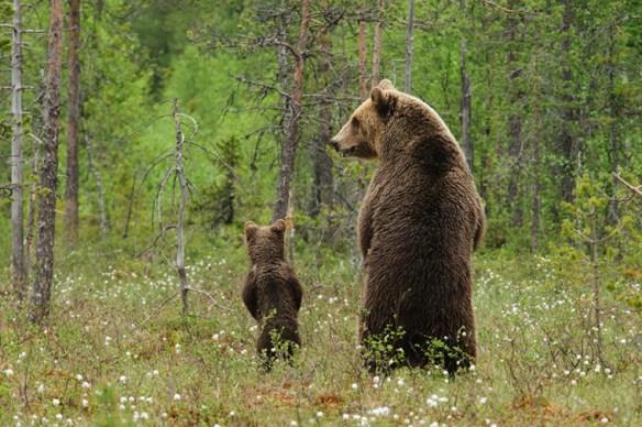 bear-photography-4-760x505