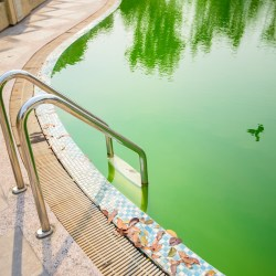 What Causes Red Algae in a Pool? 1