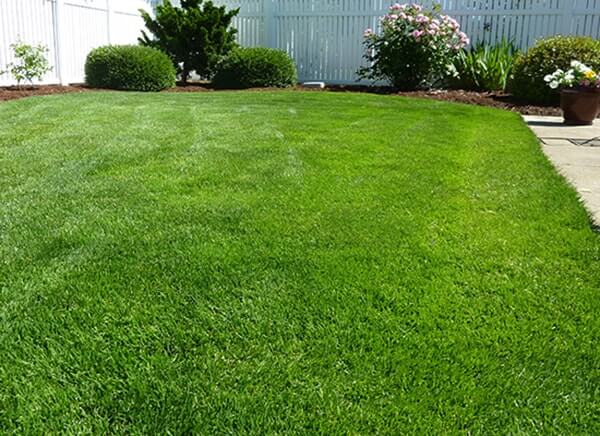 Marvelous Select The Evergreen Variety To Add A Touch Of Natureu0027s Wilderness To Your  Backyard All Year Round.