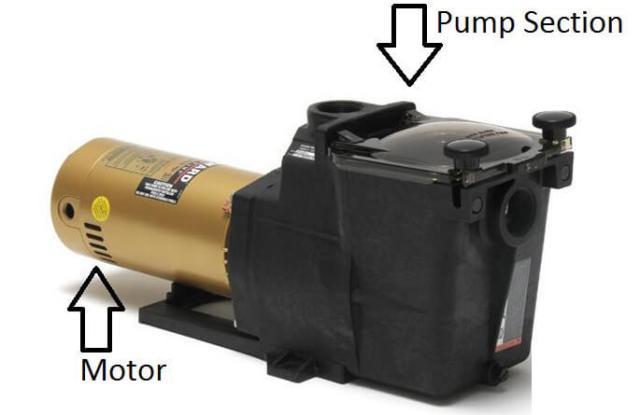 Pool Pump and Motor