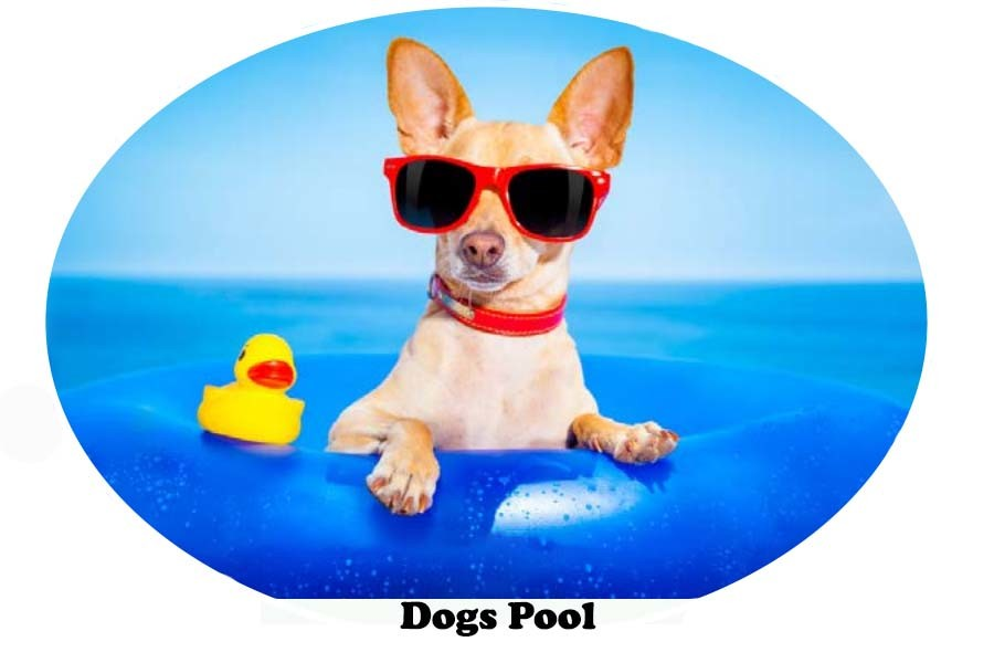 Dogs Pool Float