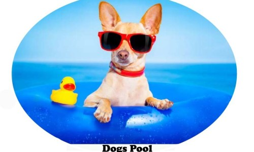 Dogs Pool – Chlorine Affects – Best Pools for Fido