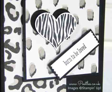 Stampin' Up! Demonstrator Pootles - Go Wild with Groovy Love! Close Up