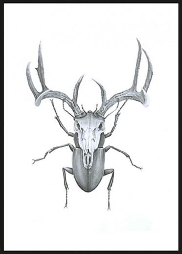 Sanna Wieslander - Mr Stag beetle