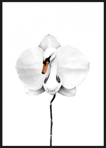 Sanna Wieslander - Swan orchid
