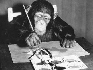 Le chimpanzé Congo en train de peindre