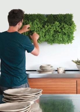 Pode deixar crescer as suas plantas na parede e regar sem medos.