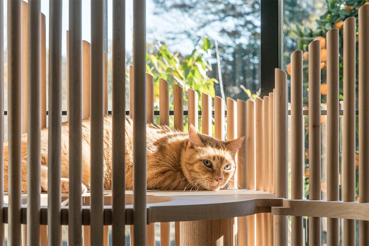 Modern Cat Tree NEKO 把藝術和實用性結合起來的貓樹架