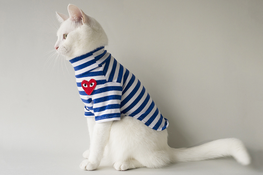 Image of 想抱緊處理!來認識這隻穿得比你還要「潮」的貓咪-Zappa