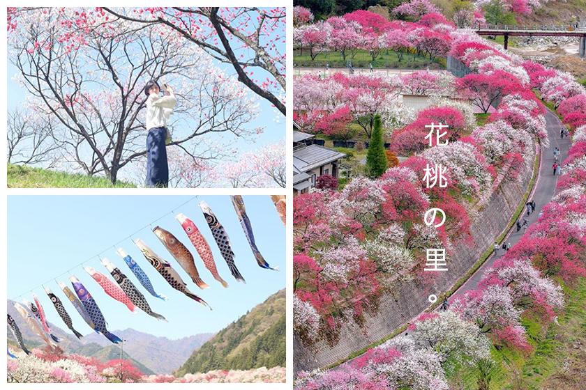 Hanamomo Peach Blossoms Achi Nagano